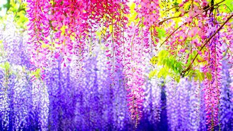 beautiful colours beautiful spring colours pics wallpaper 14631 wallpaper