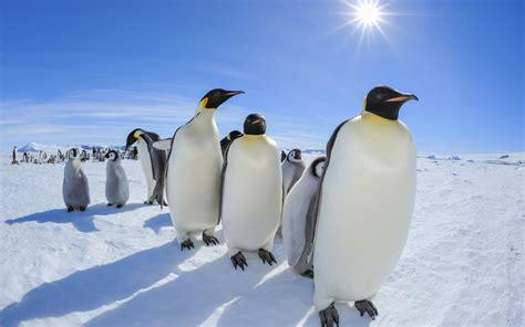 Pinguin Setbie phenomena phenomenon guides