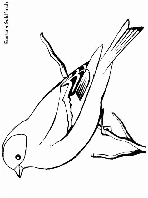 bird coloring pages  annoying ads coloring pages