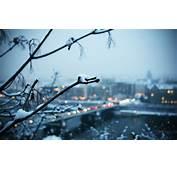 Cold Winter Evening Snow Free Wallpaper HD