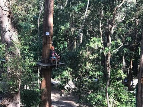 Rope Swing Picture Of Treetop Challenge Gold Coast