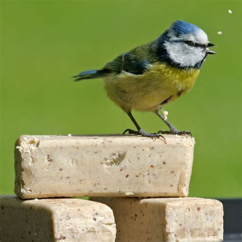super suet bars rspb wild bird food rspb shop