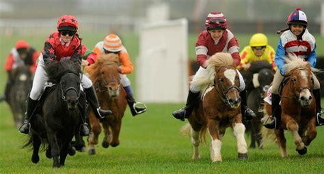 Miniatur Kuda Poni By Nicebags kumpulan gambar dan kuda poni ragam informasi