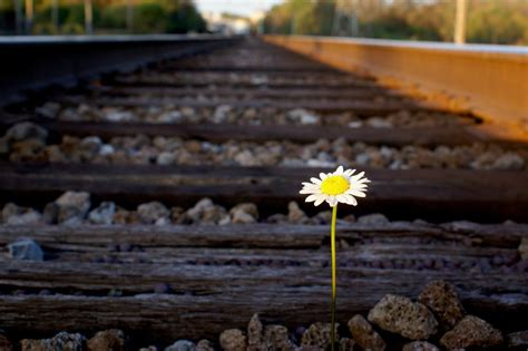 most difficult plants to grow 11 photos of flowers growing in unusual places from the