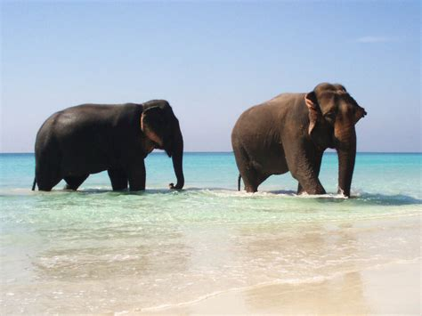 wallpaper desktop elephant wallpapers elephant wallpapers