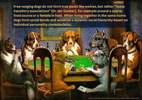 what is a of dogs called what is a of dogs called quora