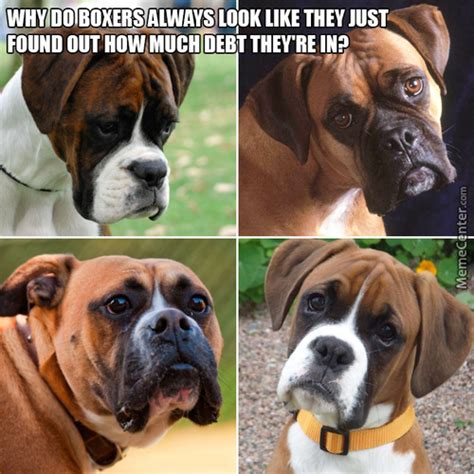 Old Boxer Meme - boxer meme www pixshark com images galleries with a bite