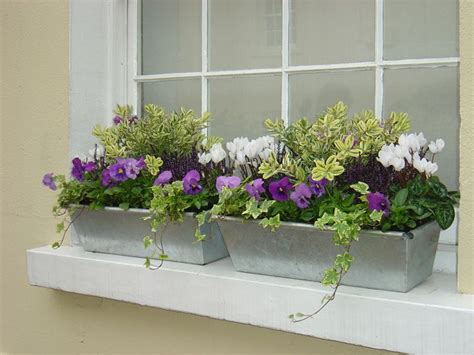 winter plants for window boxes 25 unique winter window boxes ideas on