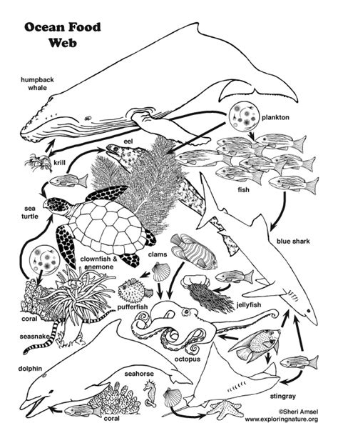 ocean food web coloring nature