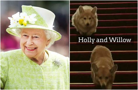 queen elizabeth s dogs queen elizabeth and her long story with corgis