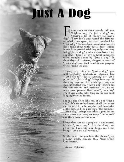 poems about dogs dying rainbow bridge and poems about loss