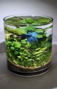 Betta Fish Planter by The World S Catalog Of Ideas