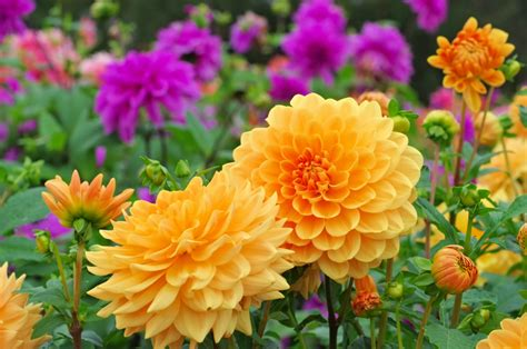 flowers that bloom at perennial flowers that bloom all summer petal talk