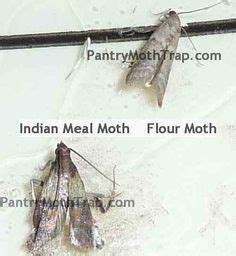 Moths In Pantry Home Remedies by 1000 Images About Pest On