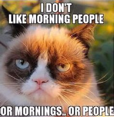 Best Angry Cat Meme - 1000 ideas about angry cat on pinterest grumpy cat