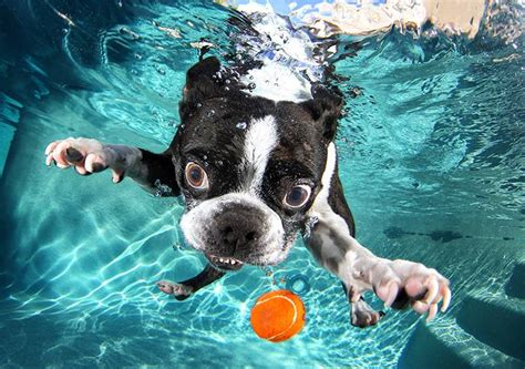 underwater puppies dogs underwater viralserv