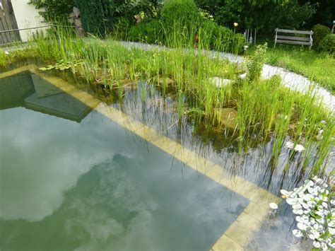 pflanzen um den teich 2980 pflanzen um den teich gartenteich goldfische biotopfische