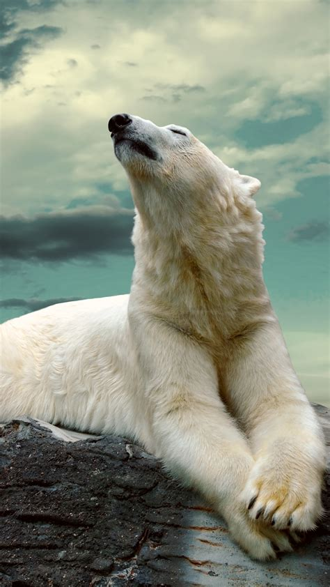 wallpaper polar bear cute animals sky clouds