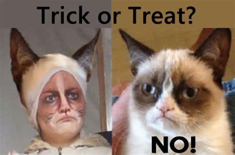 Halloween Cat Meme - grumpy cat halloween memes yes memes