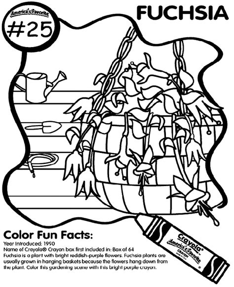 crayola coloring pages that you can print no 25 fuchsia coloring page