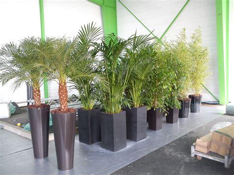 Deco Plante Exterieur deco plante exterieur mc immo