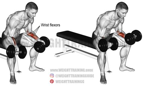 seated dumbbell wrist curl exercise and