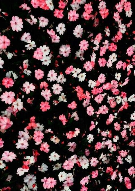 imagenes de rosas injertadas fondos de flores margaritas tumblr imagui wallpaper