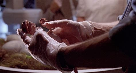 Dannielynns Baby To Be Revealed This Week by Baby Raptor In The Nursery From Jurassic Park