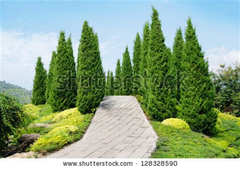 Pine Tree Gardens by Stock Images Similar To Id 56145100 White Fence Around