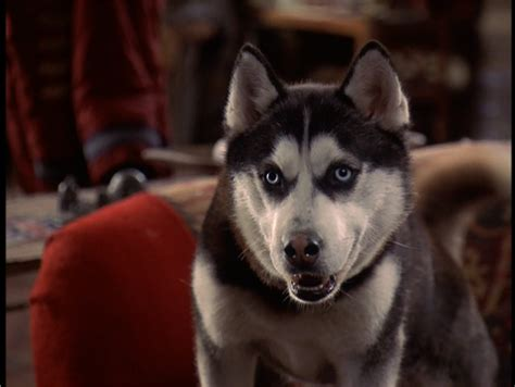 from snow dogs from snow dogs siberian huskies photo 32170977 fanpop