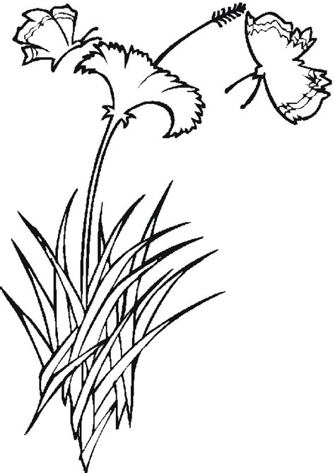 coloring pages of animals and flowers free coloring pages butterflies