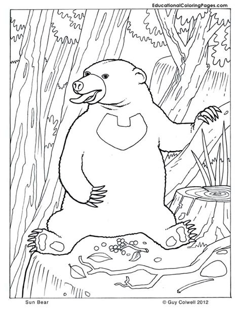 sun bear coloring pages how to draw sun bears