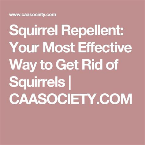 how to get rid of squirrels in the backyard 1000 ideas about squirrel repellant on pinterest