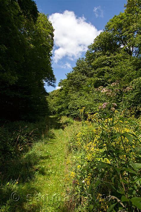 wilde bloemen in duitsland het wandelpad tussen de wilde lente bloemen bij zerkall en