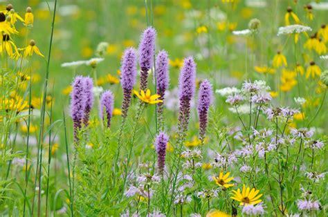 summer wildflowers at hoffman hills philip schwarz