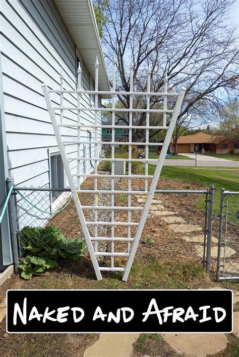trellis designs climbing plants 5 climbing plants for vertical butterfly gardens