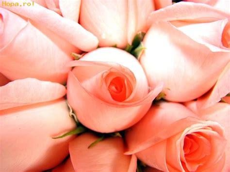 imagenes artisticas yahoo rosas fotos comicas artisticas funiacs com