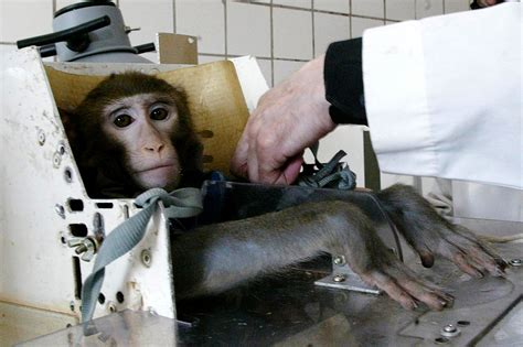 animal test introduction to how animal testing works howstuffworks