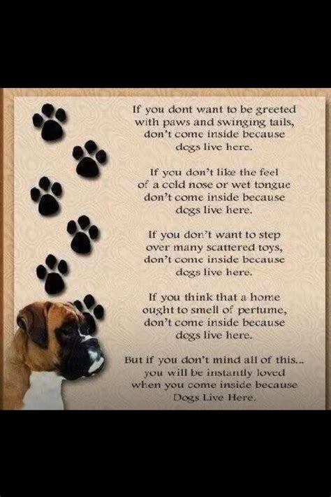 poems about dogs died poem breeds picture