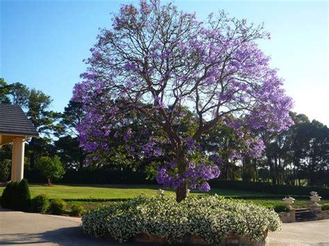 alberi da giardino con fiori alberi da giardino piante da giardino tipologie di