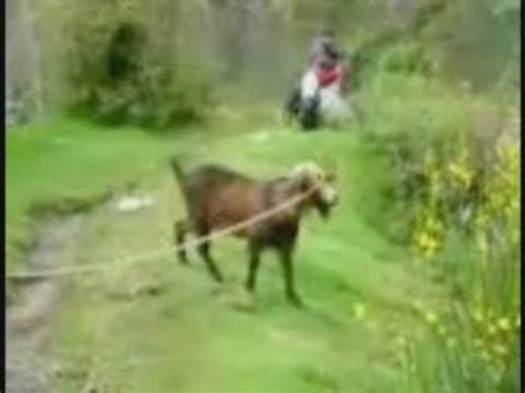 usher goat hqdefault jpg