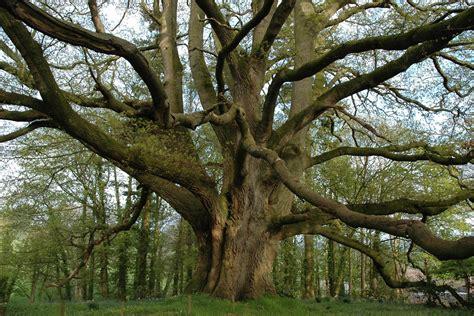 Tree Of lafzon ka perh the tree of words countercurrents