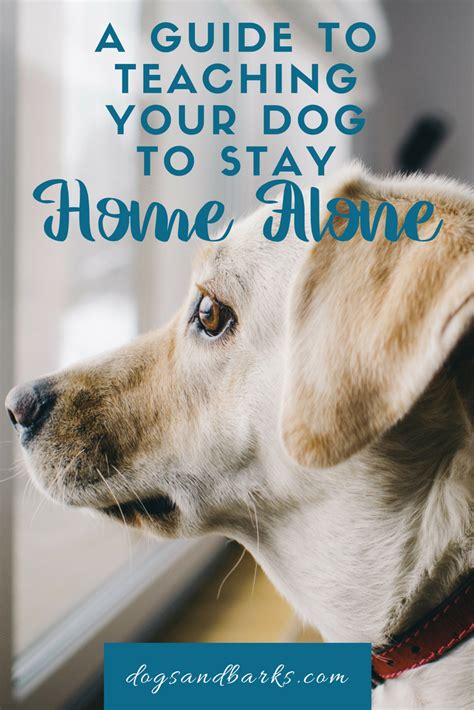 teach puppy to stay a guide to teaching your to stay home alone dogs and bark