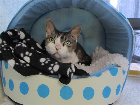 Where To Find Homeless Help Find Homeless Cats A Home This The Exeter Daily