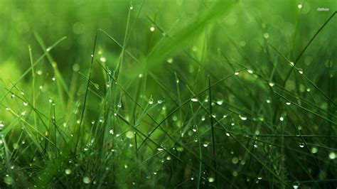 apple wallpaper grass dew on grass 562330 walldevil