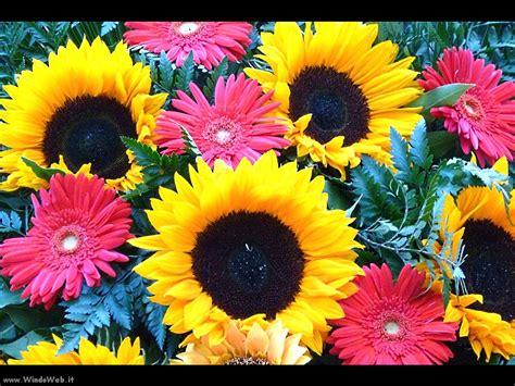 foto fiori marialuisa niccolai google