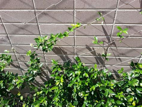 wire for climbing plants jacob inox wire climbing plants search l