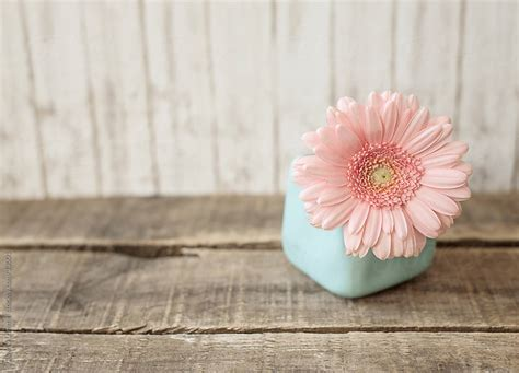 a pastel pink flower in a pale blue vase on a weathered