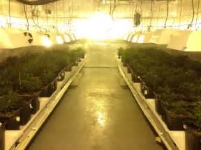 cannabis veg room design