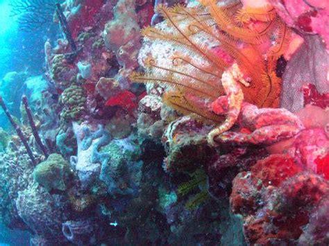Lucia Calend 2018 St Lucia November 2018 The Dive Shop